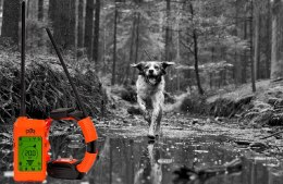 GPS for dog Dogtrace X30